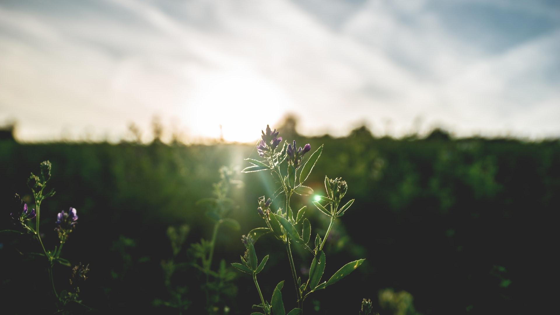 alleen genieten van het ochtend zonnetje