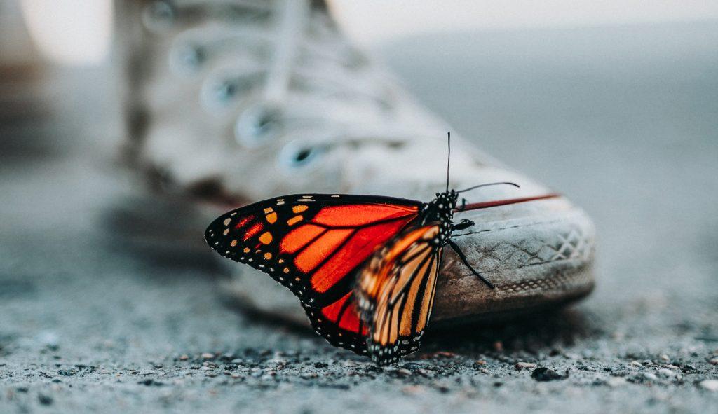 Vlinder staat voor verandering